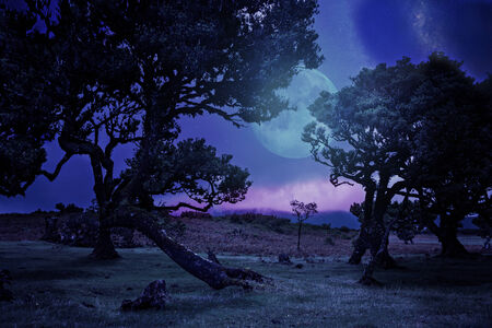 laurel mountain: Laurel tree on high mountain plateau by night Stock Photo