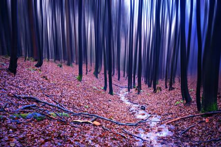 evergreen forest: The evergreen forest early in the morning