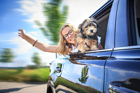 drivers license: a girl traveling by car with her family and a dog