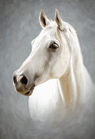 a photograph stylized as painting portrait of a white horse 版權商用圖片