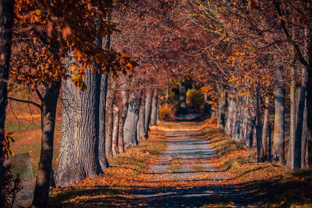 Alley trees by lake Goldbergsee near Coburg, Bavaria, Germany