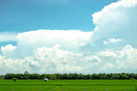 clouds above the rice fields