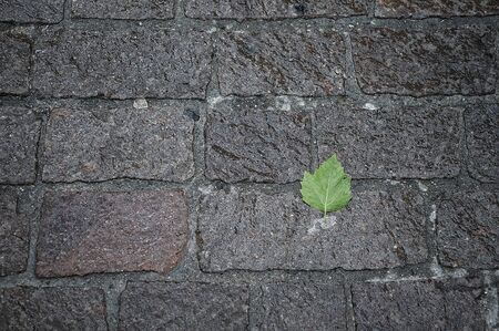 cobblestones: Texture wet cobblestones with leaf
