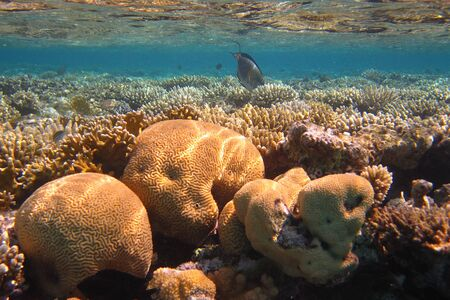 colorful fish colorful coral reef and many on the red sea photo