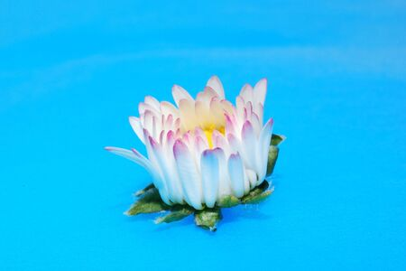 great view of a small young daisy background with blue photo