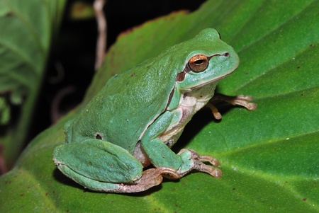 little green frog sitting on a green leaf in the sun