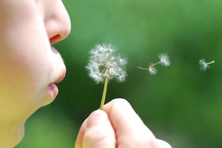 viento soplando: ni�o y golpe de blowball fresco durante el verano