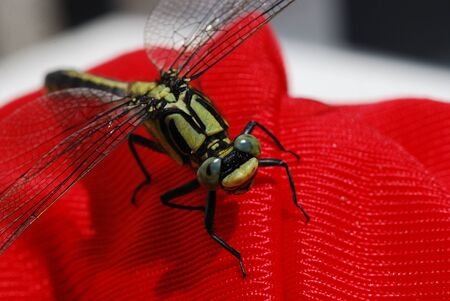 large dragonfly sitting on a red plastic in the sun Stock Photo - 11271054