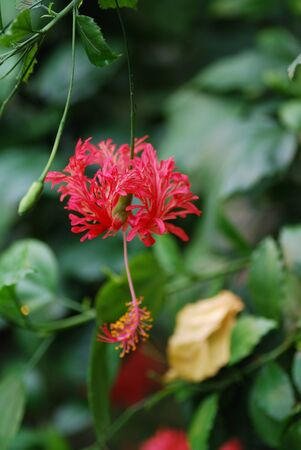 beautiful colorful red flower from the hochformat rainforest photo