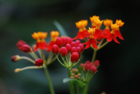 orange red flower from the large rain forest view Stock Photo - 11533276