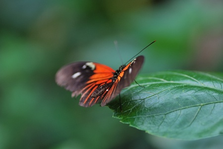 beautiful red butterfly sitting on a green leaf in the spring Stock Photo - 11594638