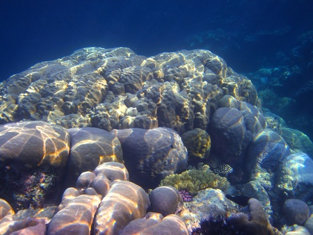 Beautiful colorful coral species with rich underwater world with many plants in the blue sea