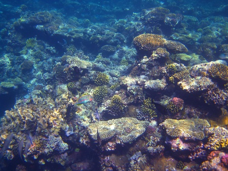 abundant: many colorful and abundant coral in the sea egypt Stock Photo
