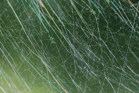 dense spider web in the forest and nature in the summer Stock Photo - 12842102