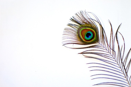 peacock eye: shining bright and colorful peacock feather on white background Stock Photo