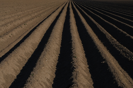 well plowed farmland with central lines and dark earth Stock Photo - 14871121
