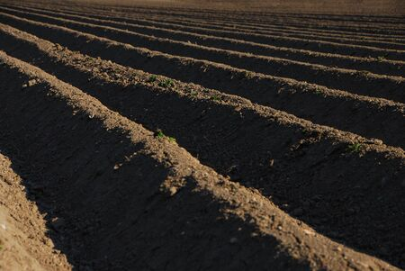 well plowed farmland with dark brown earth Stock Photo - 14871120