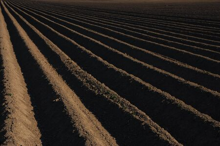 well plowed farmland with straight lines and dark earth Stock Photo - 14871123