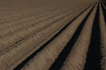 well plowed farmland with straight lines and darker earth right Stock Photo - 14871122