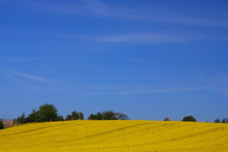 nice fresh yellow rape field on the mountain with blue sky in spring Stock Photo - 15523090