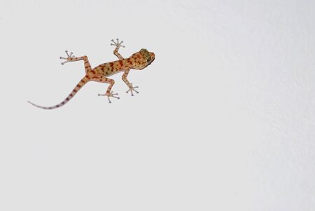 gecko climbs on a white wall left above photo