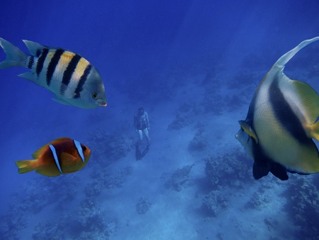 emerged: free diving or apnea diving emerged from the depths of the ocean and fish to look