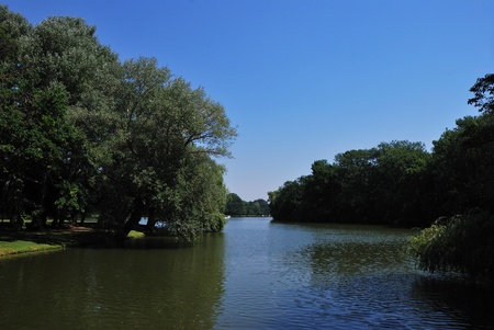 beautiful old tall trees at the lake in the summer photo