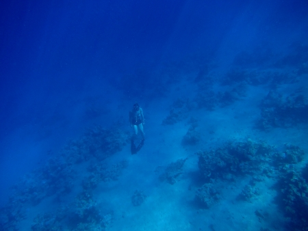 free diver: apnea diver free diver in the deep blue water with sun rays