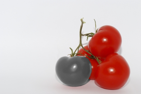 red tomato with a gray tomato on white background photo montage Stock Photo - 18149227