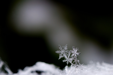 three beautiful snow crystals in winter