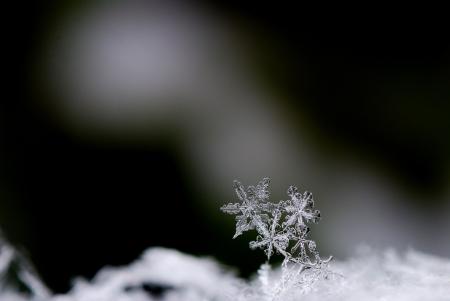 three beautiful snow crystals in winter