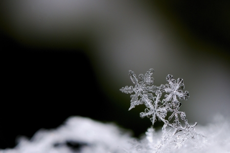 three beautiful snow crystals in winter large view Stock Photo
