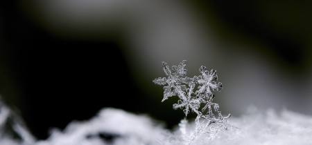 three beautiful snow crystals in winter panorama
