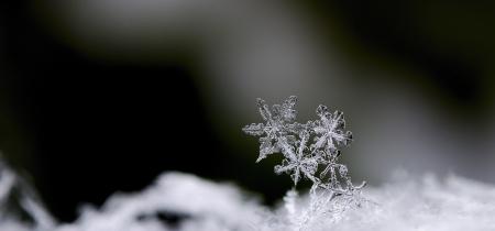 three beautiful snow crystals in winter panorama