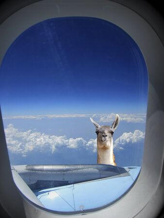 beautiful view on clouds and horizon and photomontage lama from the airplane Archivio Fotografico