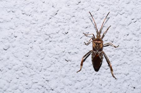 large glowing bug climbing on white wall photo