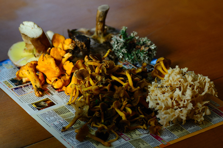 scrumptious: different mushrooms from the forest in autumn Stock Photo