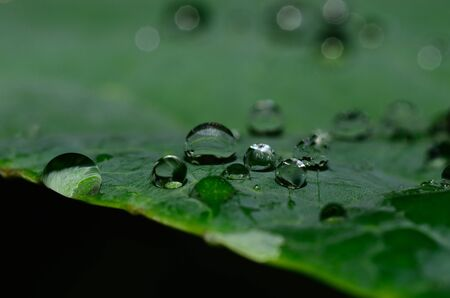 refreshes: many raindrops on a leaf macro view