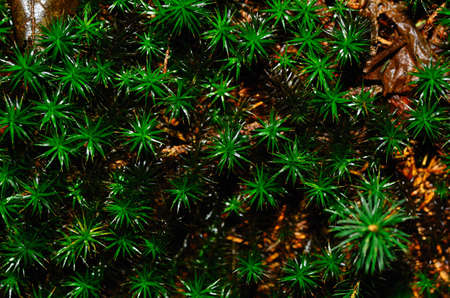 moss green star shaped view from above Stock Photo
