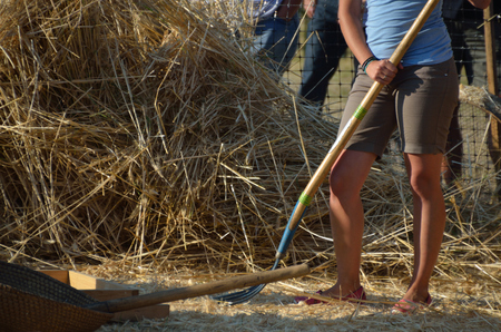 woman in shorts make the hay in summer photo