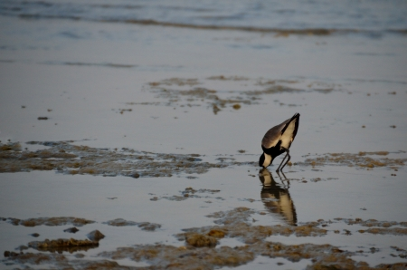 bird sticks his beak in the water at the sea photo
