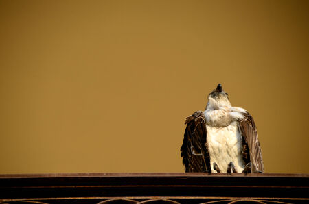 high up: eagle sitting high up on a railing of house