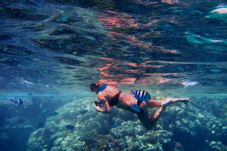 freediving: young woman in bikini between many fish in the sea