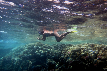 young woman in bikini and fins dive in the sea photo