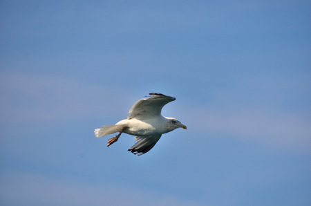 white gull flying on the sea under blue sky photo