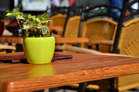 flower pot on a wooden table on the terrace Stock Photo