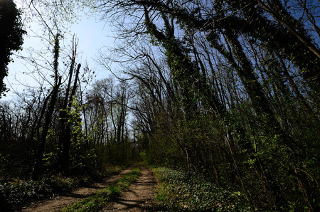 tannenbaum: path in a forest in the natural Stock Photo