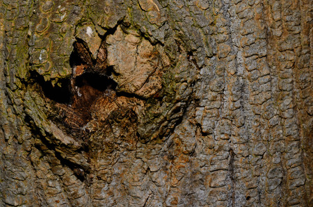 hole in a tree bark in the forest photo