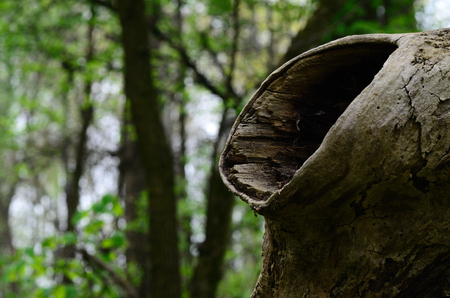 large knothole in a tree and forest