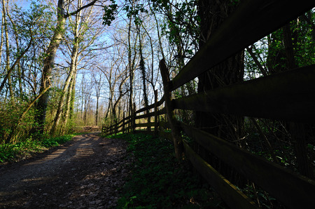 tannenbaum: wooden fence and hiking way in a forest